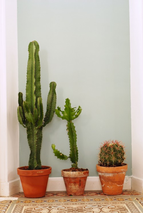 cactusfamily