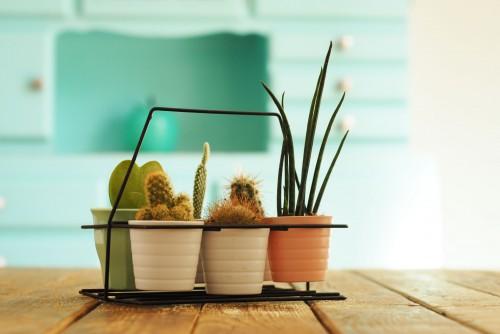 porte-cactus-2