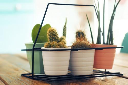 porte-cactus