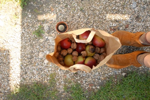 fruits-d'automne