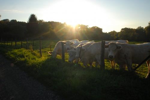 on-va-voir-les-vaches