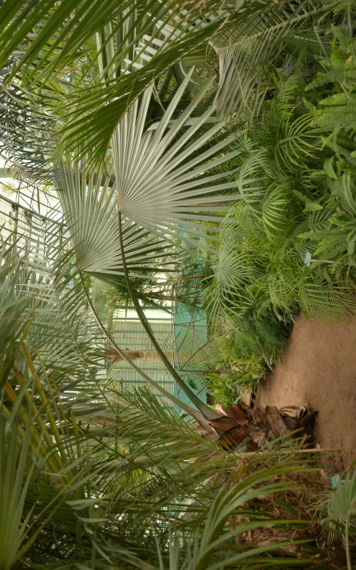 Les petites sorties d'été: Le jardin des serres d'Auteuil