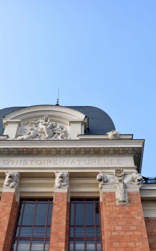 les petites sorties: La galerie de paléontologie et d'anatomie comparée et une chouette journée à paris