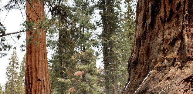 Notre voyage en Californie, Séquoïa park et un passage éclair à Santa Barbara.