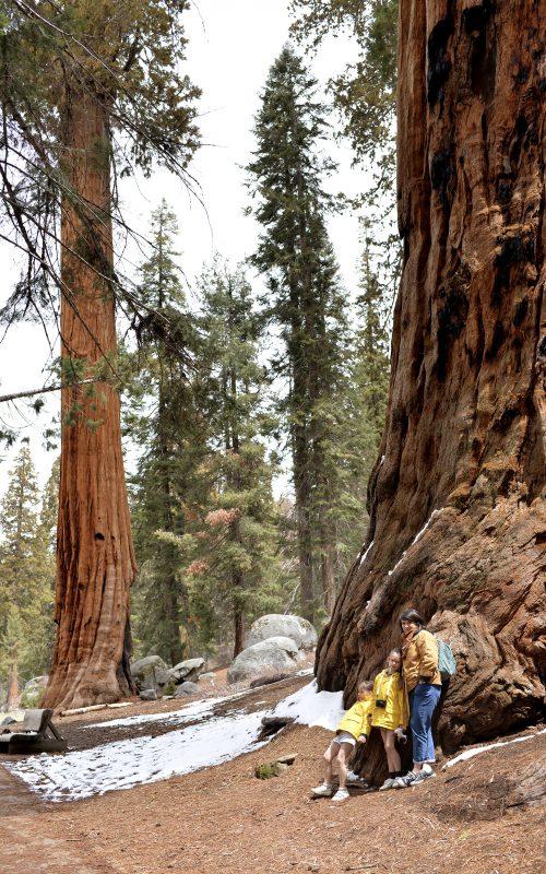 Notre raod trip en Californie, Sequoïa park