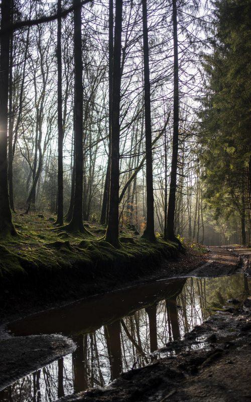 Une cabane dans les Ardennes Belges